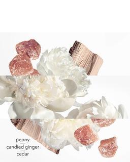 TWILLY EAU GINGER Eau de Parfum  - 30 ML
